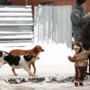 Цял град живее в страх от няколко бездомни кучета- с видео