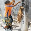 Хлапета- инквизитори се забавляват като убиват животни- с видео