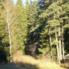 Заменките на земи и гори – келепир от няколко милиарда за шепа избрани, жесток удар за България! – с видео