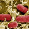 Вносни зеленчуци сеят смъртоносна зараза у нас ?