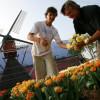 Холандски сайт събира жалби срещу български емигранти