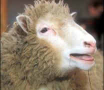 Пълна идиотщина! Войници изнасилват овца пред погледа на стопанина! (ВИДЕО)