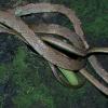 Учени намериха нов вид змия