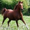 Бургаска кобила отхапа ухото на пазач, докато я чукал!