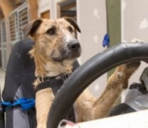 Невероятно! Куче мина шофьорски изпит и взе книжка!