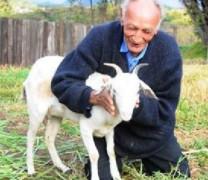 Шок! Бразилец се жени официално за козата си Кармелита