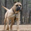 Отровиха кучето на милионера Ветко Арабаджиев