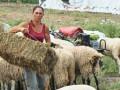 ЕС за Чумата по Овцете в Странджа: Не е ясно от какво бяха болни животните! ГЕРБ се скриха като мишки!
