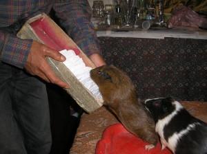 Христо учи гризачите на номера с бой и глад!
