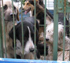 Кучешките приюти са удобен параван за източване на пари от общината