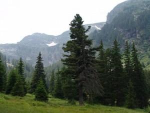 Олигарсите разграбиха и планините