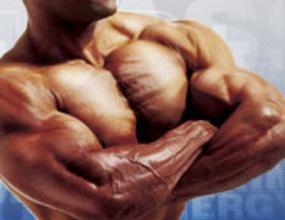 културист мускули