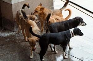 """Парите за бездомните кучета са отишли в търбусите на шефовете на """"Екоравновесие"""""""