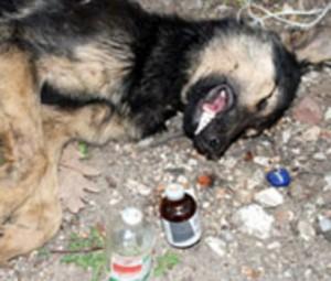 кучета отрова