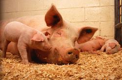 Медиите и пиар агенциите яко бозаят от свинята майка ГЕРБ