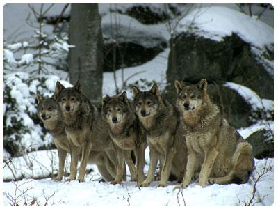 самые опасные животные в Болгарии