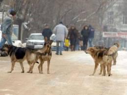 Улични песове