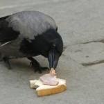 Гладна птица