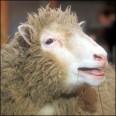 Израелци изнасилиха палестинска овца