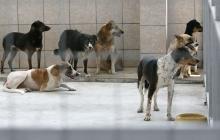 кучета бездомни