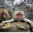 Ето тези водни маймуни са нашите прародители