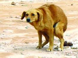 куче ака1