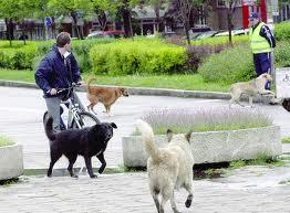 куче ака3