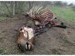 кон умрял