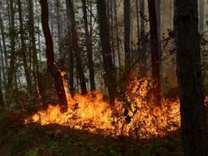 пожар в свиленград