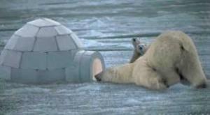 бяла мечка напада иглу