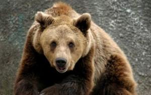 мечка стръвница