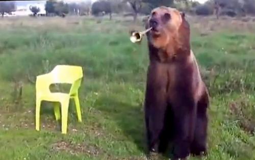 дресура на мечка