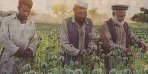 75% от хероина в света идва от маковите полета в  Афганистан, които са под контрола на талибаните
