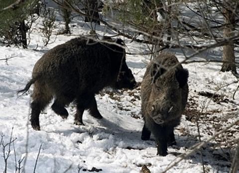 Стрелбата по беззащитни животни не е лов