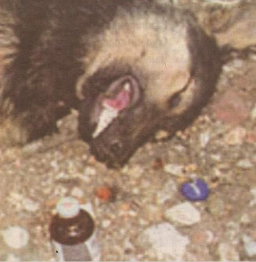 Избиват домашни и улични кучета с хапове за мишки