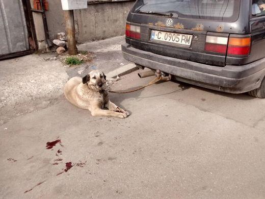 куче влачено